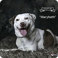 Adopt A Pet :: Marybeth - Acton, CA