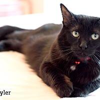 Adopt A Pet :: Mary-Tyler - Oakville, ON