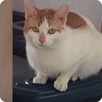 Adopt A Pet :: Percy - Randleman, NC