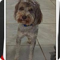 Adopt A Pet :: Fozzy - Mesa, AZ