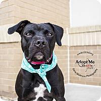 Adopt A Pet :: Portia - Charlotte, NC