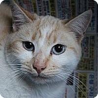 Adopt A Pet :: Redford - Santa Monica, CA