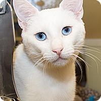 Adopt A Pet :: Angel - Irvine, CA
