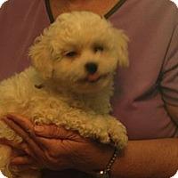 Adopt A Pet :: Cottontail - Hazard, KY