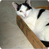 Adopt A Pet :: Lizzie - Chicago, IL