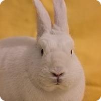 Adopt A Pet :: Sugar - Portland, ME
