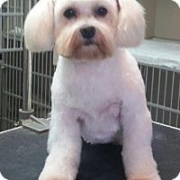 Adopt A Pet :: DIXIE - Boca Raton, FL