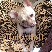 Adopt A Pet :: Baby doll - calimesa, CA