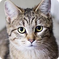 Adopt A Pet :: Piper - Chicago, IL