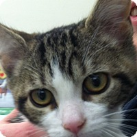 Adopt A Pet :: Earl - Warren, OH