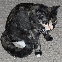 Adopt A Pet :: Thelma - Pensacola, FL