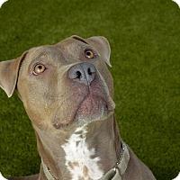 Adopt A Pet :: Sassy - Van Nuys, CA