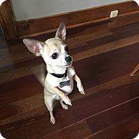 Adopt A Pet :: Petunia - Grand Rapids, MI