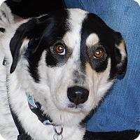 Adopt A Pet :: Samson - Conesus, NY