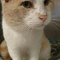 Adopt A Pet :: Evander - Ashtabula, OH
