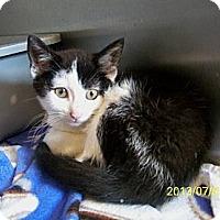 Adopt A Pet :: Parker - Dover, OH