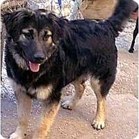 Adopt A Pet :: Roscoe - dewey, AZ