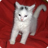 Adopt A Pet :: Frosty - Richmond, VA