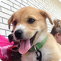 Adopt A Pet :: Lottie - Somers, CT