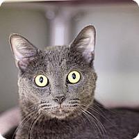 Adopt A Pet :: Lindo - Chicago, IL