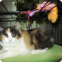 Adopt A Pet :: Wendy - CARVER, MA