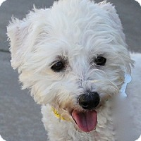 Adopt A Pet :: Jack - La Costa, CA