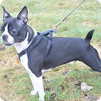 Adopt A Pet :: Dexter - Tumwater, WA