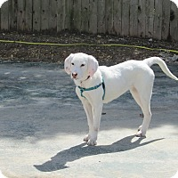 Adopt A Pet :: Missi - Shrewsbury, NJ
