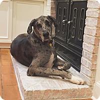 Adopt A Pet :: Odin - Austin, TX