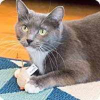 Adopt A Pet :: Cam - Chicago, IL