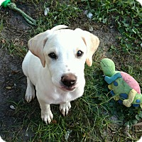 Adopt A Pet :: Bethany - Tampa, FL