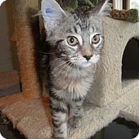 Adopt A Pet :: Clefairy - Milwaukee, WI