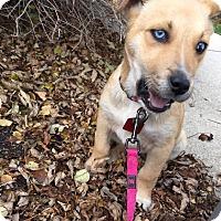 Adopt A Pet :: HARLOW - Winnipeg, MB