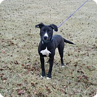 Adopt A Pet :: Vinnie - Cameron, MO