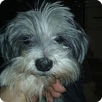Adopt A Pet :: Chloe (Adoption Pending) - Northeast, OH