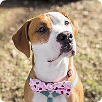 Adopt A Pet :: Sebastian - Durham, NC