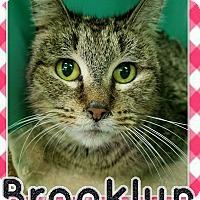 Adopt A Pet :: Brooklyn - Edwards AFB, CA