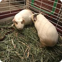 Adopt A Pet :: April and May - Marlton, NJ