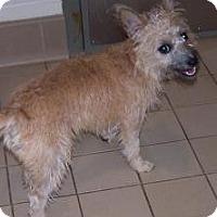 Adopt A Pet :: Tara - Jackson, MI