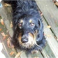 Adopt A Pet :: Lisa - San Jose, CA