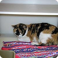 Adopt A Pet :: Pumpkin - Ludington, MI