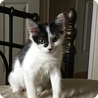 Adopt A Pet :: Leona - Monroe, GA