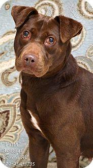 Labrador Retriever/Shar Pei Mix Dog for adoption in Newnan City, Georgia - Faith
