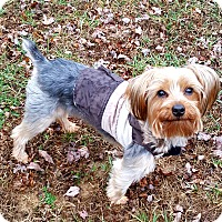 Adopt A Pet :: Dusty - Ashland City, TN