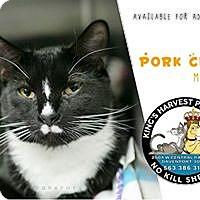 Adopt A Pet :: Pork Chop - Davenport, IA
