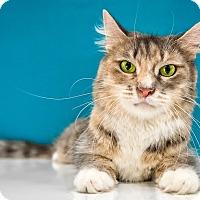 Adopt A Pet :: Clover - Chandler, AZ