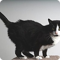 Adopt A Pet :: Moo @ Petsmart - Reno, NV
