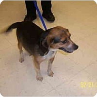 Adopt A Pet :: PHOEBE - Rossford, OH