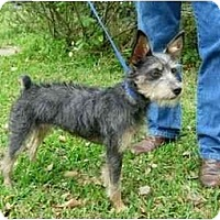Adopt A Pet :: Mae - Kingwood, TX
