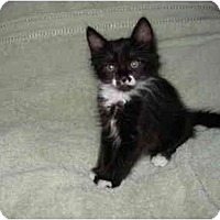 Adopt A Pet :: Bandit - Modesto, CA